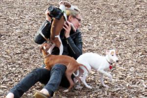 san francisco, pet, dog, photographer, dog photographer, bay area, california, italian greyhound, female, rescue, volunteer