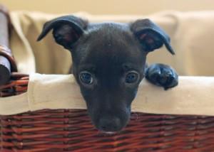 San Francisco, puppy, photographer, pet, dog, pup, mutt